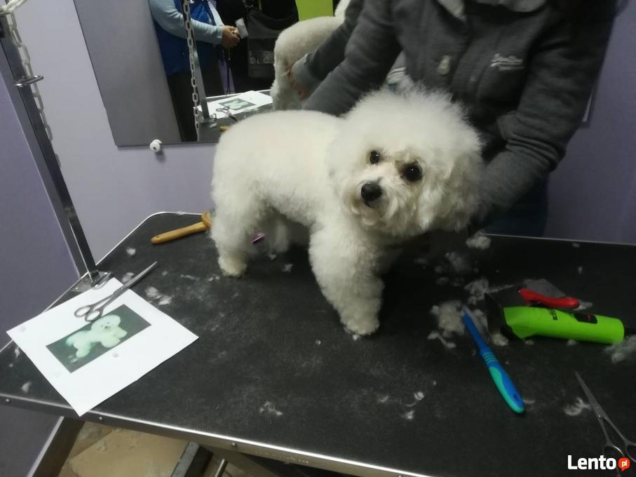 Psi Fryzjer Centrum Pielęgnacji Psów I Kotów Pasja Będzin