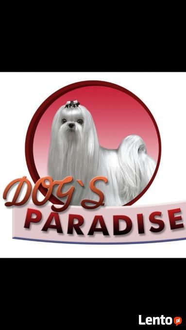 Dogs Paradise Fryzjer Dla Psów Gliwice