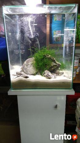 Zestaw Aquael Shrimp Set Led 30l Białe Szafka Ostrowiec