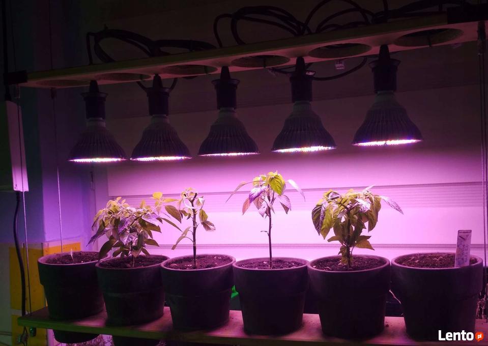 Mocne żarówki Led Grow Do Uprawy Roślin Będzin