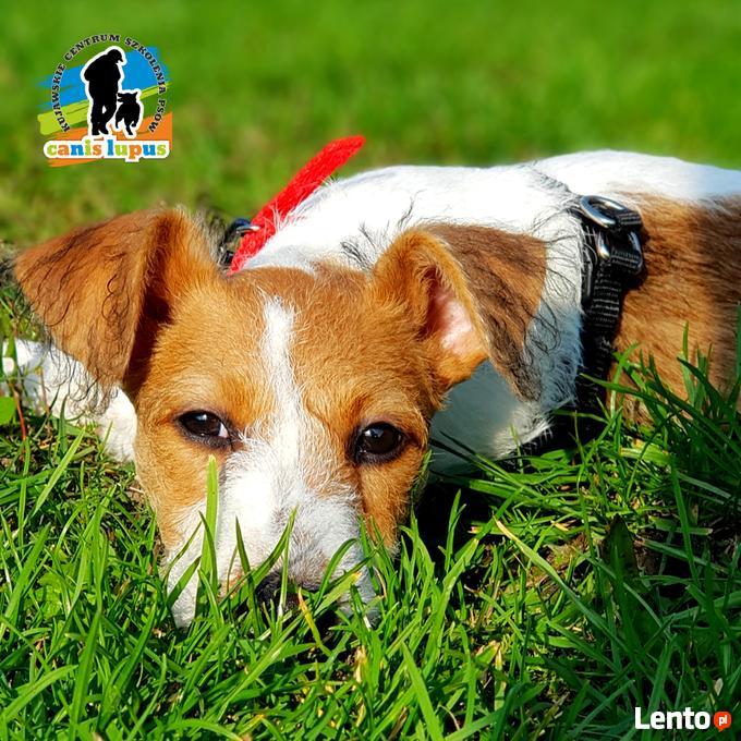 pozytywne szkolenie psów pdf chomikuj