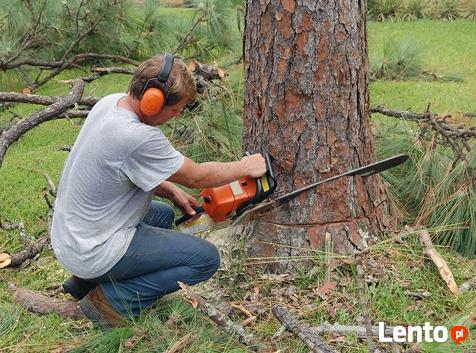 przycinanie gałęzi drzew i ścinanie drzew Warszawa Okolice