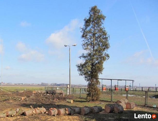 Wycinka Drzew, Pielęgnacja Drzew, Usuwanie Gałęzi