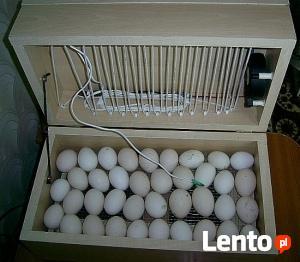 inkubator do jaj kur pisklat gesi kury wylegarka klujnik
