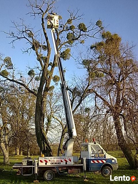 Wycinka i pielęgnacja drzew-sprzątanie ogrodów