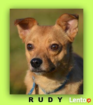 niewielki Rudy chce zaufać człowiekowi !