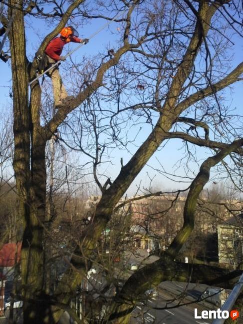 Wycinka Drzew, Pielęgnacja Drzew, Usuwanie Gałęzi, Korzeni
