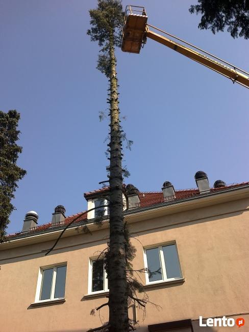 Wycinanie drzew karczowanie krzaków przycinanie koron drzew