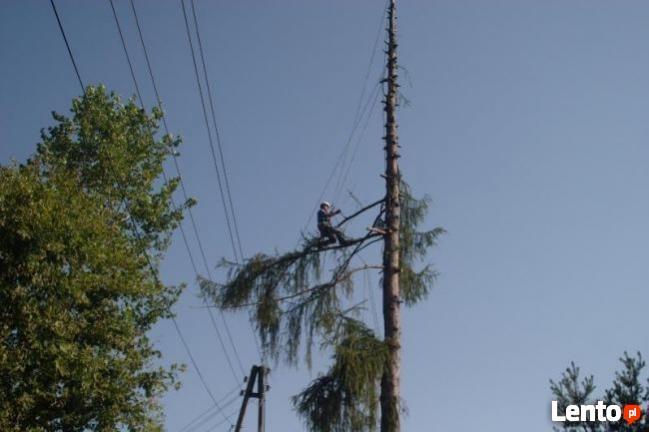 Alpinistyczna Wycinka i Przycinka Drzew Rzeszów