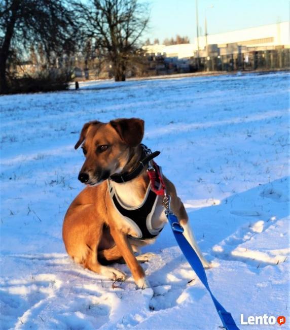 Sonia - idelany pies dla mało aktywbych ludzi