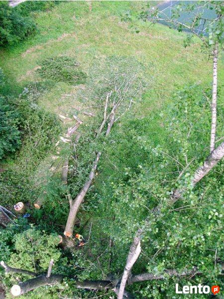 WYCINKA Drzew, PRZYCINKA Gałęzi, FREZOWANIE Korzeni- Rzeszów