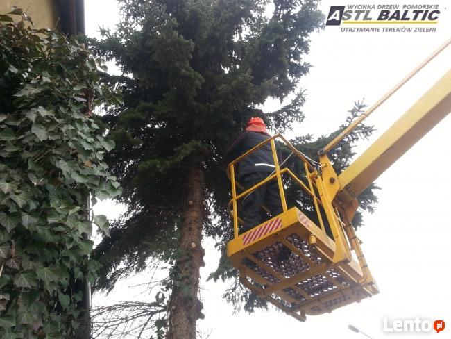 Wycinka drzew Gdańsk,Gdynia,Sopot,Pruszcz Gdański ZADZWOŃ