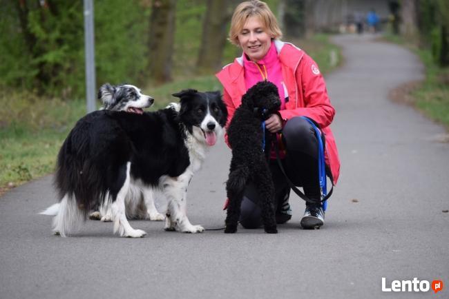 obozy dla miłośników psów , kurs: Treser Psów