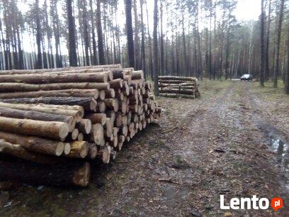 Wycinka drzew Parczew i okolice