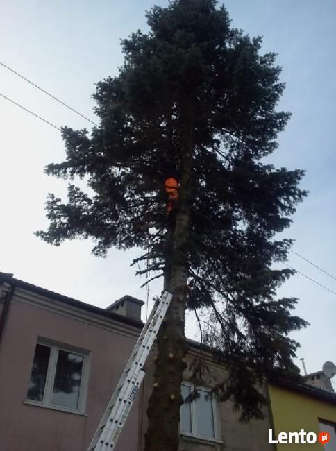 Wycinki drzew podcinanie gałęzi zrębkowanie lubelskie