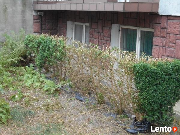 Usługi ogrodnicze i porządkowe działek placów posesji