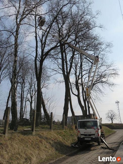Wycinka drzew Lublin