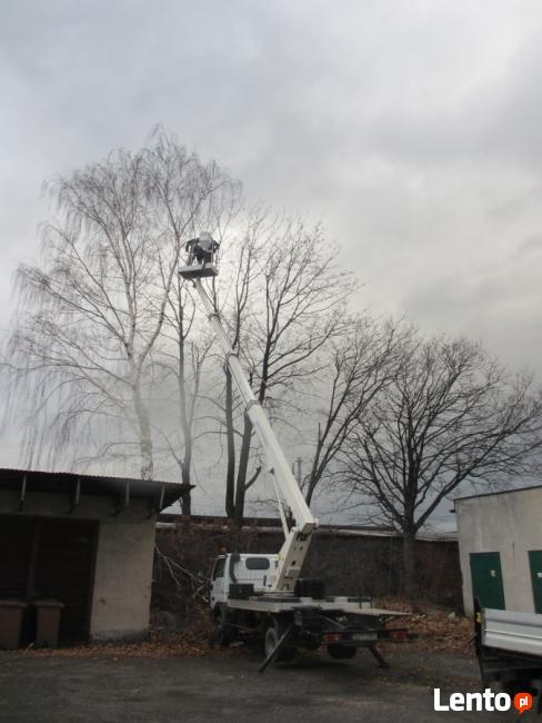 Wycinka drzew, frezowanie pni