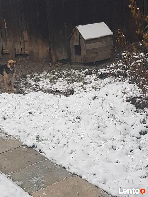 Mały - pies z łańcucha, kochany, łagodny, towarzyszki ADOPCJ