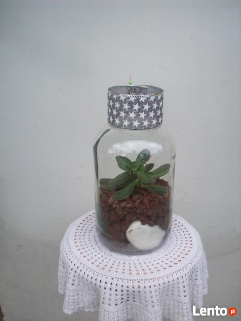 Żywa kompozycja roślinna w szkle 3