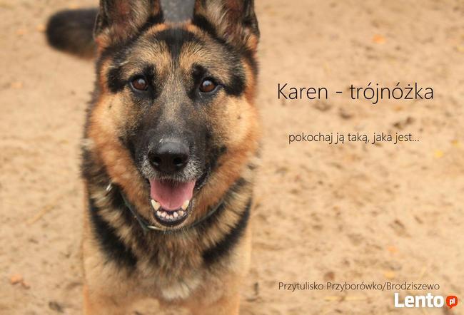 Karen - w typie Owczarka niemieckiego, cudowna trójnóżka