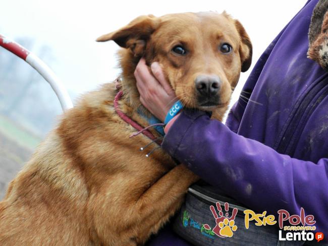 KALLI-prześliczny, młody, grzeczny,kochany psiak-szukamy domu