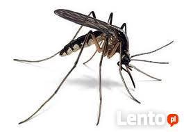 ODKOMARZANIE - zwalczanie komarów meszek