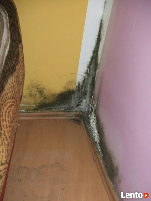 KRISOFF Odgrzybianie - usuwanie pleśni z pomieszczeń