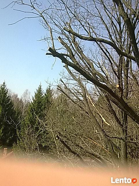Sprzątanie ogrodów-przycinanie, pielęgnacja i wycinka drzew