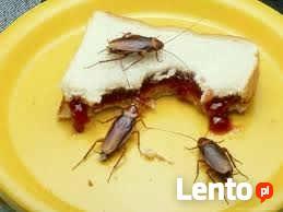 Zwalczanie karaluchów, karaluchy likwidacja , odkaraluszanie