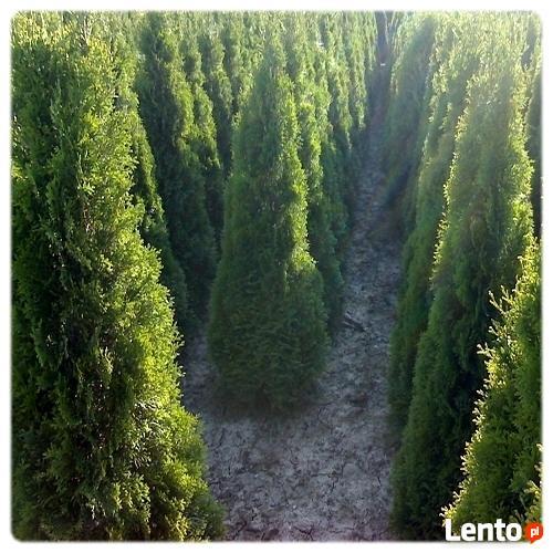 Ogrody Ogród Koszenie Tuje Wisła Ustroń Brenna Bielsko