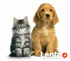 Bezstresowe strzyzenie psow,kotow dlugowlosych