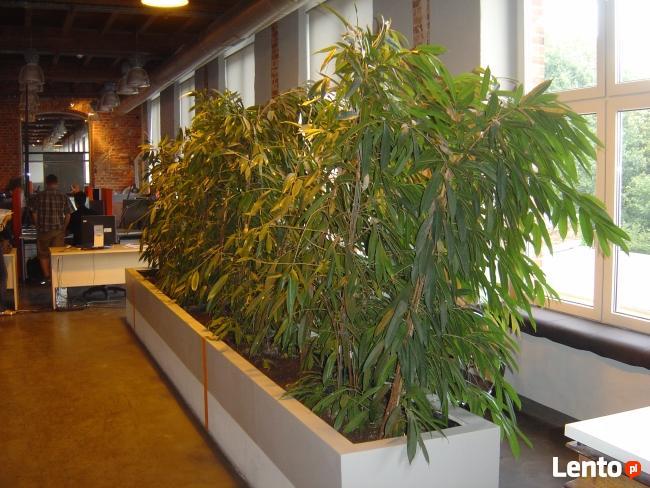 BioArt pielęgnacja roślin w ogrodzie i w firmie Lubelskie