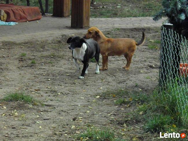 Kaja i Beti, dwie urocze sunie