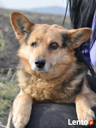 SNAJPEREK-spokojny,nieduży,grzeczny starszy psiak z 1oczkiem