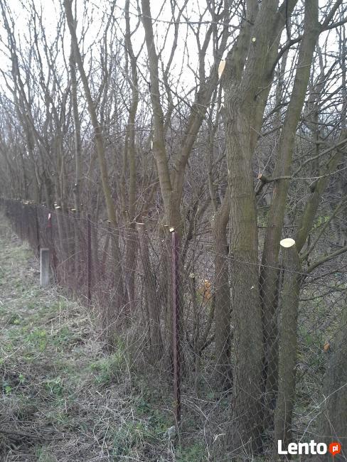 Wycinka i pielęgnacja drzew- sprzątanie ogrodów w Lublinie
