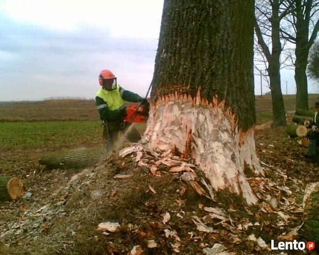 wycinka drzew Katowice SOSNOWIEC Dąbrowa Górnicza Będzin
