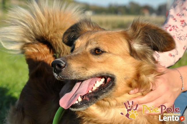 KELWINEK-nieduży, spokojny kudłaty psiak-5-6 lat-szukamyDOMU