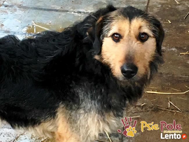 SALMONEK-spokojny, przyjazny,grzeczny młody psiak-szukamyDOMU