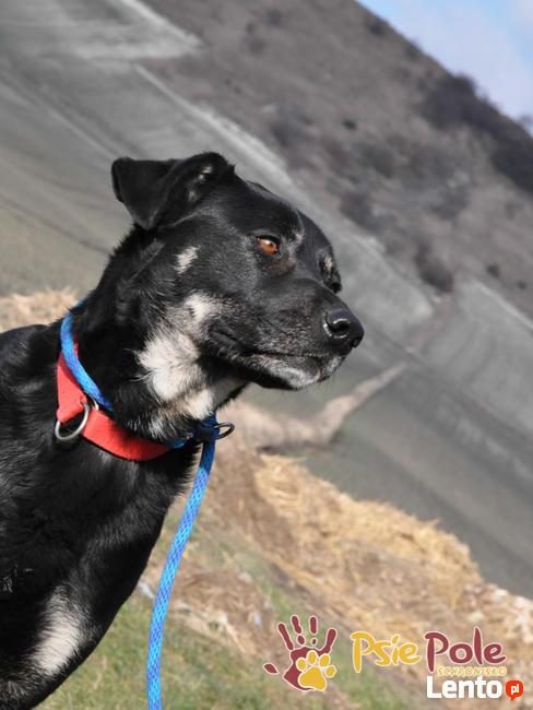 TEZORO-przepiękny, zadbany, bardzo przyjazny młody psiak-ADOP