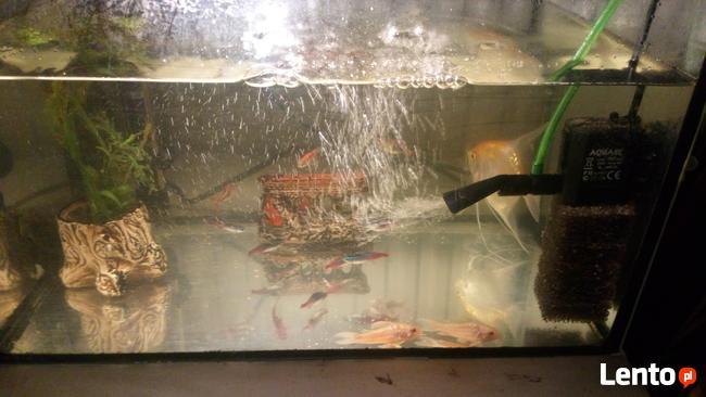Ryby online randki za darmo