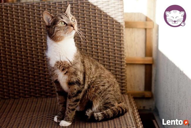 Chałka - delikatna kocia królewna