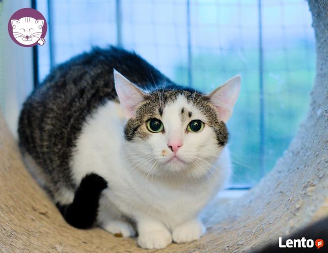 Vastra - nieśmiała koteczka szuka domu i przyjaciela!