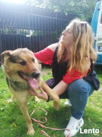 Laserak pies, który przeżył Radysy szuka domu Monika