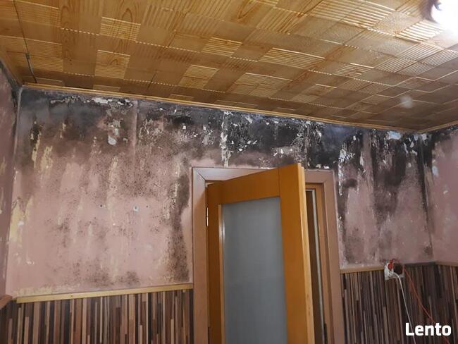 Profesjonalne usuwanie pleśni i grzybów ze ścian