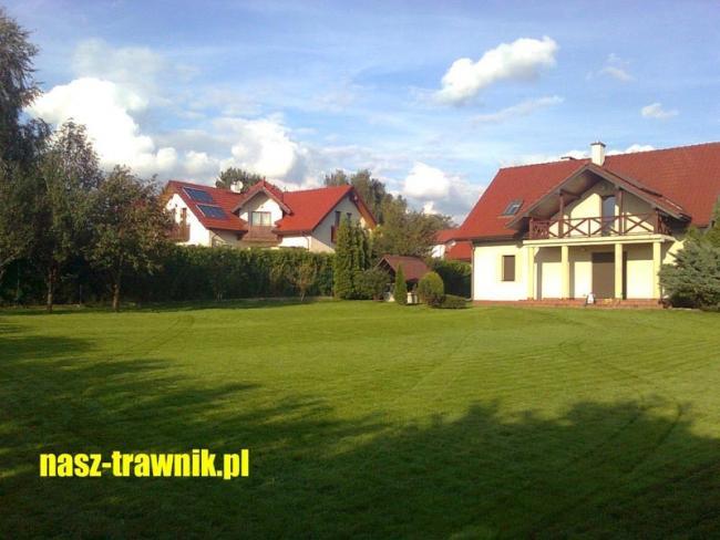 trawnik z rolki. trawnik rolowany. trawa na trawnik.