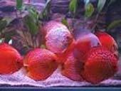 najwi.wybór ryb akwariowych i do oczka wodnego tanie akwaria