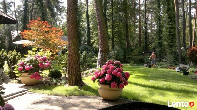 Usługi ogrodnicze-projektowanie, zakładanie 501233483