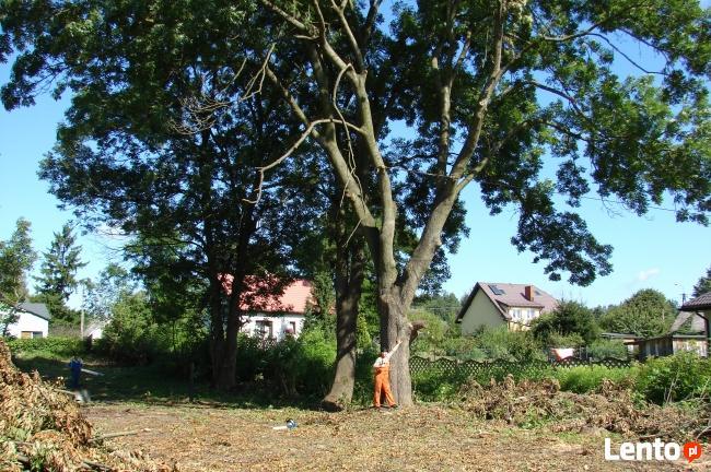 Wytnę Drzewo za DARMO !!!