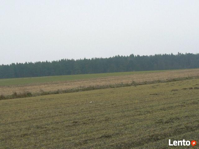 Sprzedam działkę o pow. 3000 m2 ok. 15 km od Płońska